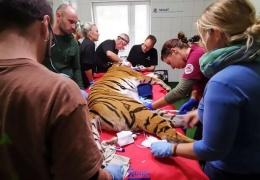 Немецкие стоматологи поставили тигрице золотой клык