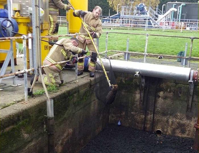 Спасатели вытащили лису из сточной ямы на заводе по переработке отходов