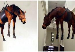 Подвешенная под потолком лошадь в музее Пушкина возмутила россиян