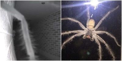 В два часа ночи парню в дверь позвонил самый большой паук в мире
