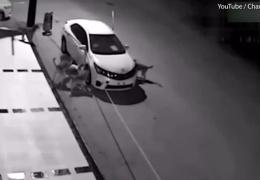 Собаки раскурочили машину, в которой спряталась кошка
