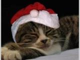 Рождественские коты