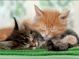 Ох уж эти кошки
