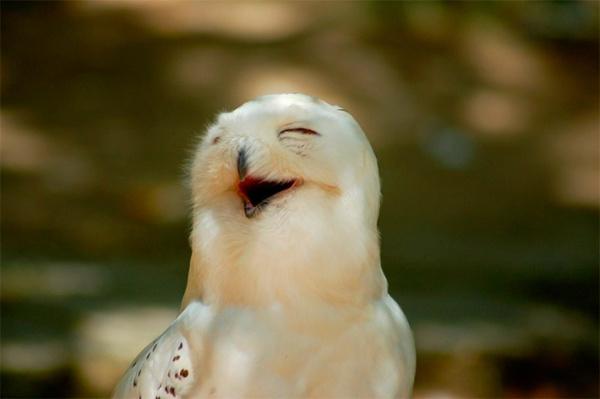Животные улыбайки (29 фото)